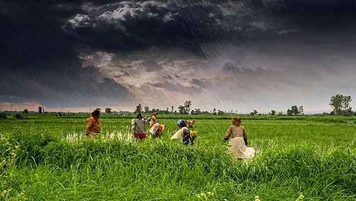 Farming in Madhya Pradesh India